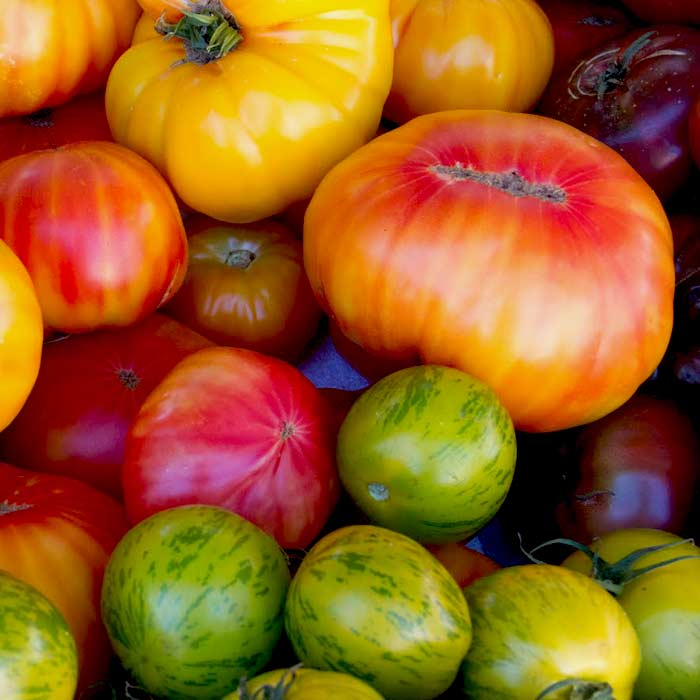 recipes-tomatoest-pic